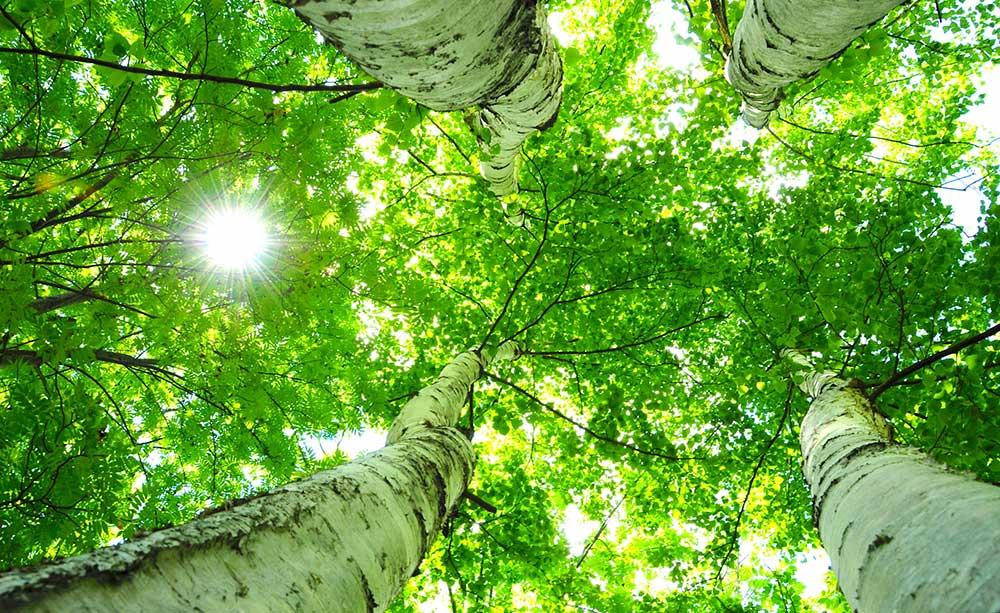 緑豊かな森