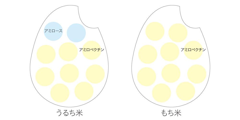 うるち米ともち米のデンプンの違い