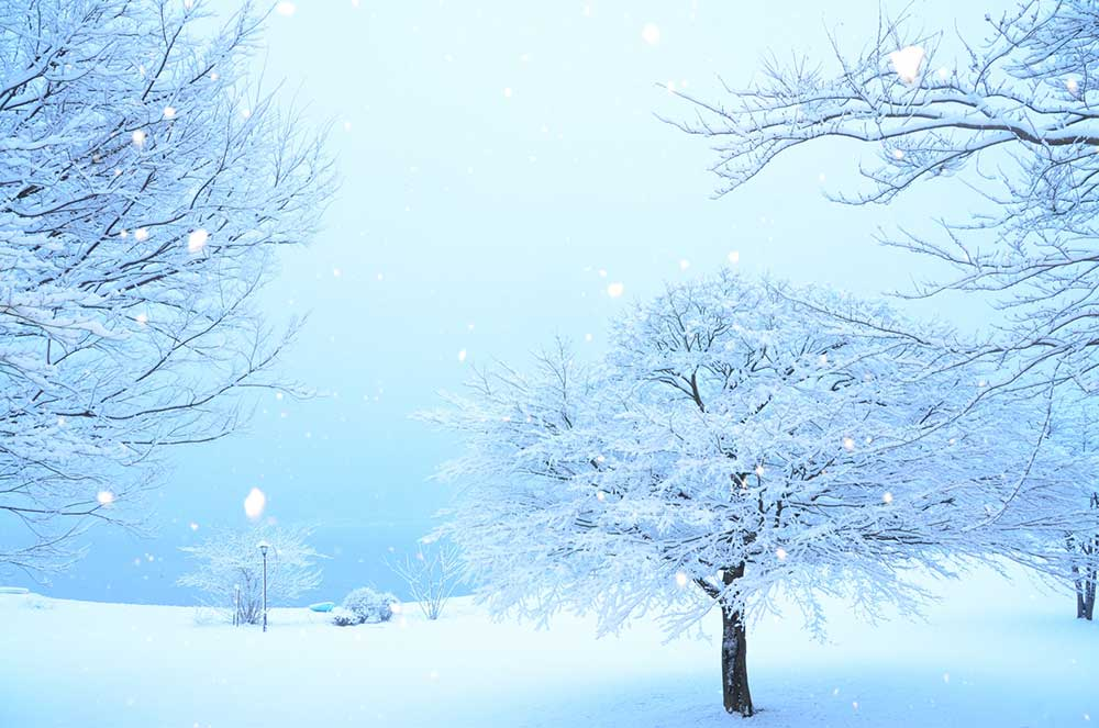 冬にふる雪