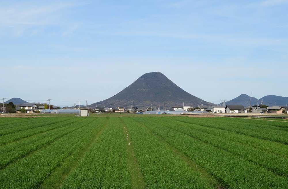香川県の田んぼ